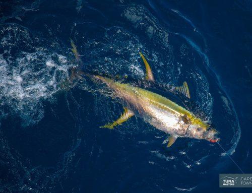 Tuna Nationals