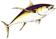 tuna masters cape town left